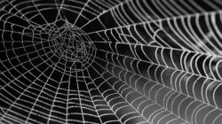 Van spin in het web